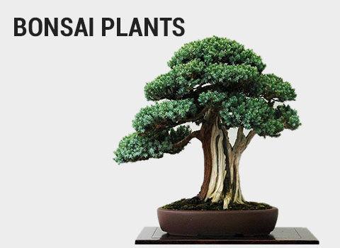 Bonsai-plants-mob-17-feb-2019.jpg