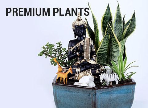 premium-plants-19-feb-2019.jpg