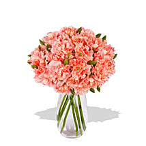 Pink Carnation: Send Flowers to Perth