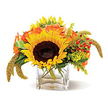 Country Sunflowers CND