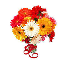 12 Multi Color Gerberas Bouquet: Gifts to Vancouver
