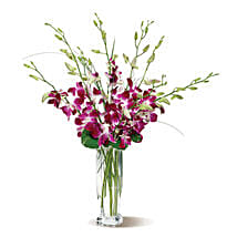 Dendrobium Orchids: Canadian Gifts for Men