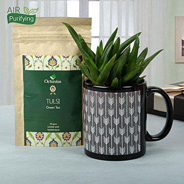 Green Plant Hamper