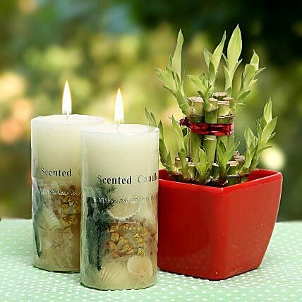 Lucky Bamboo With Scented Candle by FNP