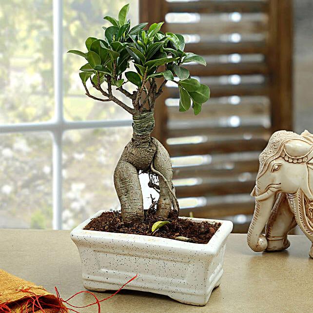 Marvellous Bonsai Plant