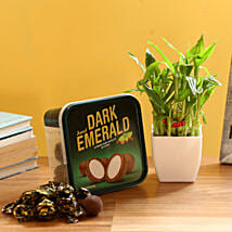 2 Layer Bamboo & Amul Emerald Chocolate: Send Lucky Bamboo for Anniversary