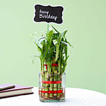 2 Layer Bamboo Plant For Happy Birthday: Buy Indoor Plants