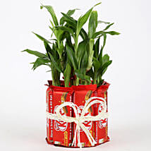 2 Layer Lucky Bamboo Kit Kat Chocolates: Order Plants n Chocolates
