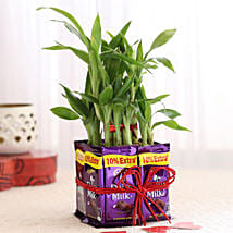 2 Layer Lucky Bamboo With Dairy Milk Chocolates: Send Plants for Anniversary