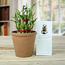 2 Layers Luck Bamboo Plant: Gifts for 75Th Birthday