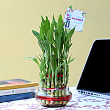 3 Layer Lucky Bamboo For Daughter's Day: Plants - Same Day Delivery