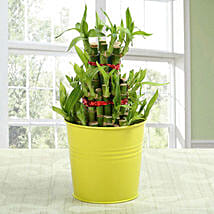 3 layer lucky bamboo Plant: Send Lucky Bamboo to Hyderabad