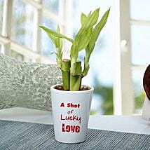 A Shot Of Lucky Love Plant: