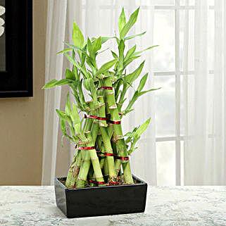 Artistic 3 Layer Pyramid Bamboo Plant: Send Plants to Ludhiana