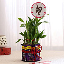 Bamboo with Love Tag & Dairy Milk Combo: Send Plants to Pune