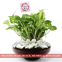Beautiful Scindapsus Plant For Anniversary: Send Plants for Anniversary