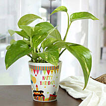 Birthday Special Plant: Birthday Gifts