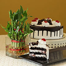 Blackforest Cake N Two Layer Bamboo Plant: Holi Cakes