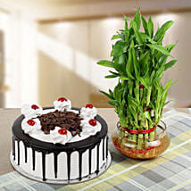 Blackforest Cake With Three Layer Bamboo Plant: Lucky Bamboo for Teachers Day