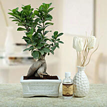 Bonsai N Oil Diffuser: All Gifts