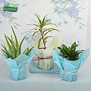 Bring Joy to Life Plants: