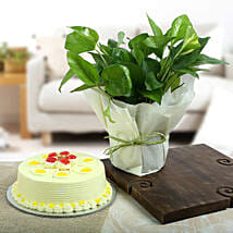 Butterscotch Cake N Lucky Money Plant: Holi Special Cakes