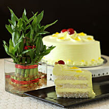Butterscotch Cake With Bamboo Plant: Send Lucky Bamboo for Teachers Day