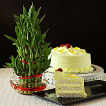 Butterscotch Cake With Three Layer Bamboo Plant: Holi Special Cakes