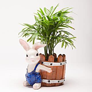 Chamaedorea Plant in Resin Rabbit Pot: Pots for Plants