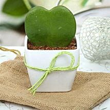Cute Love Plant: Outdoor Plants