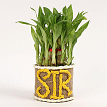 Elegant 2 Layer Lucky Bamboo Plant For Sir: Gift For Boss