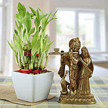 Eternal Bond: Send Lucky Bamboo to Hyderabad