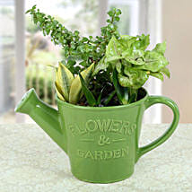 Exotic Dish Garden: Send Plants for Birthday
