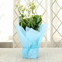 Exotic Kalanchoe Plant: Gifts for Geminians
