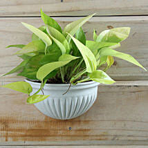 Exotic Money Plant: Good Luck Plants for Her