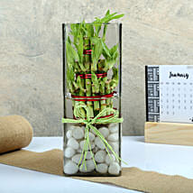 Exquisite Three Layer Bamboo Terrarium: Send Plants to Chennai