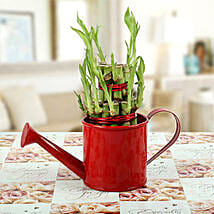 Feng Shui Bamboo Plant: Lucky Bamboo for Mothers Day