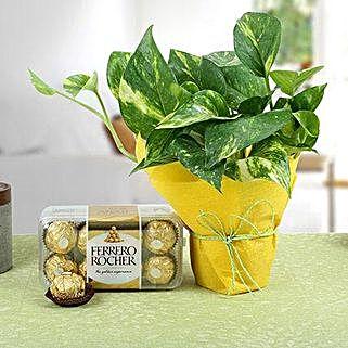 Ferrero Rocher N Money Plant: Bhai Dooj Gift Hampers