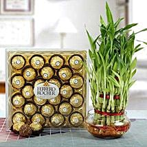 Ferrero Rocher with Three Layer Bamboo Plant: Premium & Exclusive Gift Collection