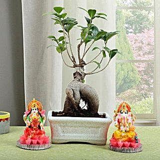 Ficus Micro Carpa Bonsai Combo: Laxmi Ganesh Gifts