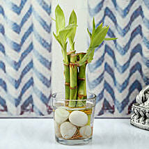Find Luck With Bamboo plant: Desktop Plants