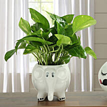 Freshen Up Money Plant: Gifts to Loni