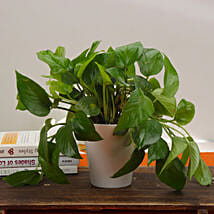 Good Fortune Money Plant: Plants for birthday