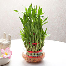 Good Luck Three Layer Bamboo Plant: Gold Rakhi