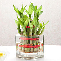 Good Luck Two Layer Bamboo Plant: Anniversary Gifts Vasai