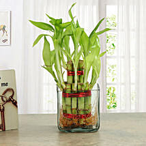 Good Luck Two Layer Bamboo Plant: Gifts to Manipal
