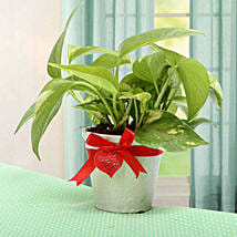 Grab The Luck Money Plant: Valentines Day Gifts Solapur