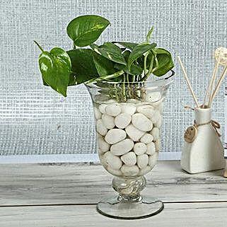 Intensifying Money Plant Terrarium: