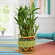 Love For Lucky Bamboo: Buy Indoor Plants