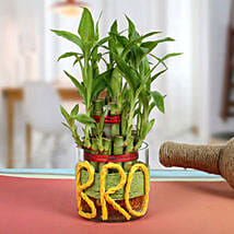 Lucky Bamboo For Brother: Gift for Brother